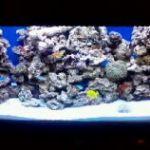 морские аквариумы обслуживание изготовление Сочи,Адлер