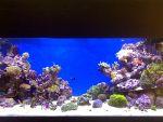 Продается морской аквариум 540л