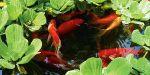 Обслуживание аквариумов и прудов