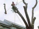 Спил деревьев - расчистка участка Б.Сочи.