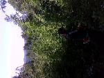 Служба расчистки земельных участков. Спил деревьев.