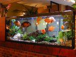 Установка и обслуживание аквариумов в Сочи.