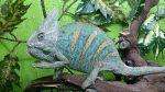 Продажа рептилий из питомника reptileworld