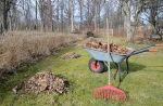 Расчистка участков от деревьев «под ключ» в Сочи