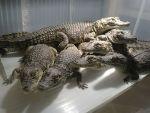 Продажа рептилий в Краснодаре