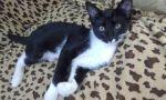 Общительный кот в добрые руки