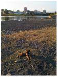 Щенок девочка сторожевая собака черное море адлер