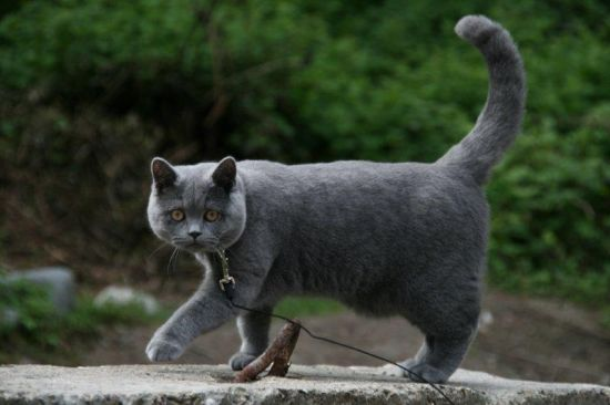 Кот на вязку из рук в руки